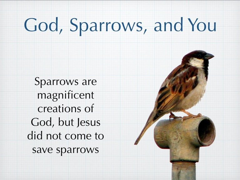 Sermon: God, Sparrows, and You « Savage Street Church of Christ