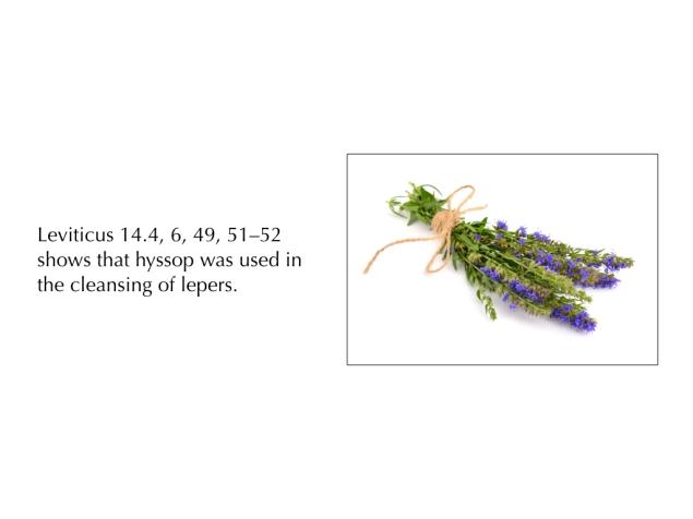 03951,Presentation Images.017