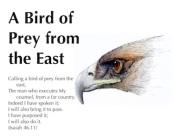 bird-of-prey-featured-image
