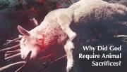 animal-sacrifices-featured-image